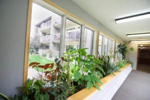 Elim Lodge Senior Suites Plants